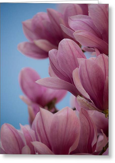 Magnolia On Blue Sky Greeting Card