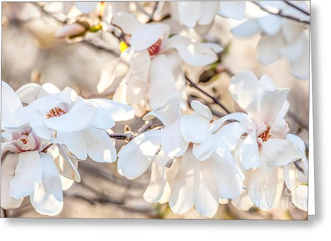 Magnolia Spring 2 Greeting Card by Susan Cole Kelly Impressions