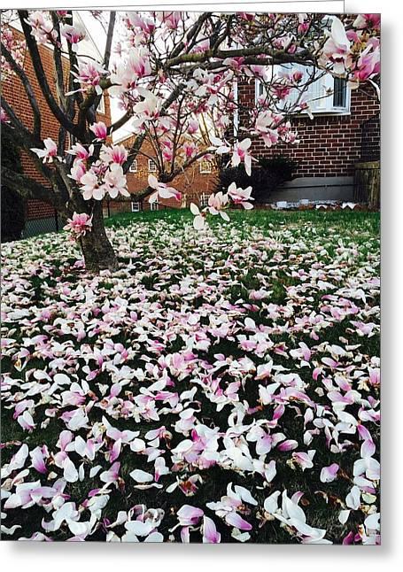 Magnolia Greeting Card by Toni Martsoukos