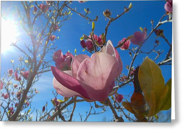 Magnolia Tree 1 Greeting Card