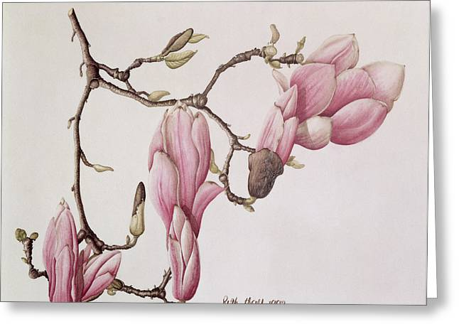Magnolia X Soulangiana, 1992 Wc On Paper Greeting Card by Ruth Hall