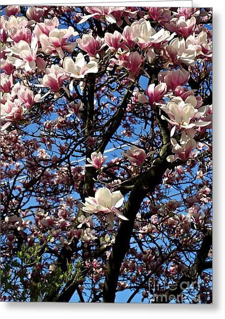 Magnolias Greeting Card