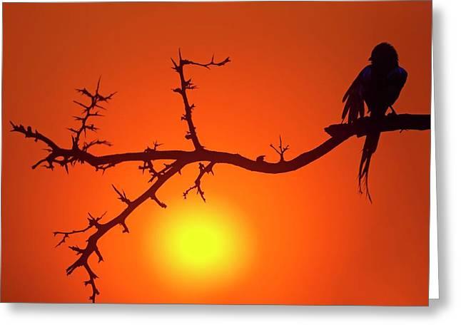 Magpie Shrike Greeting Card by Bildagentur-online/mcphoto-schaef