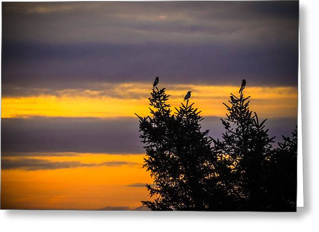 Magpies At Sunrise Greeting Card