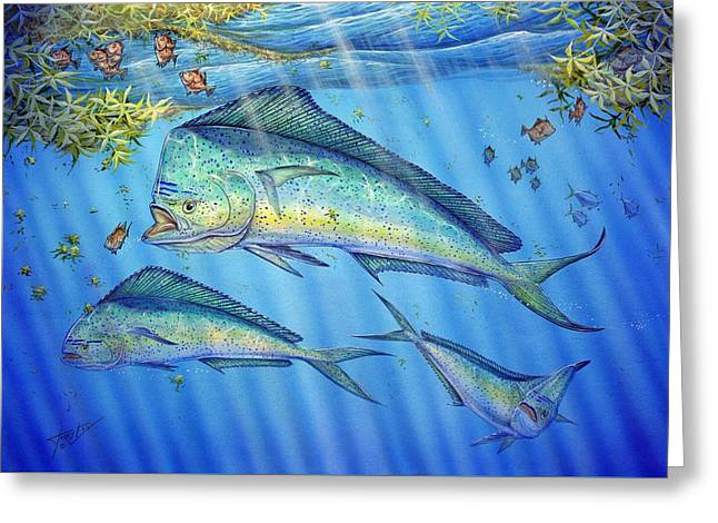 Mahi Mahi In Sargassum Greeting Card