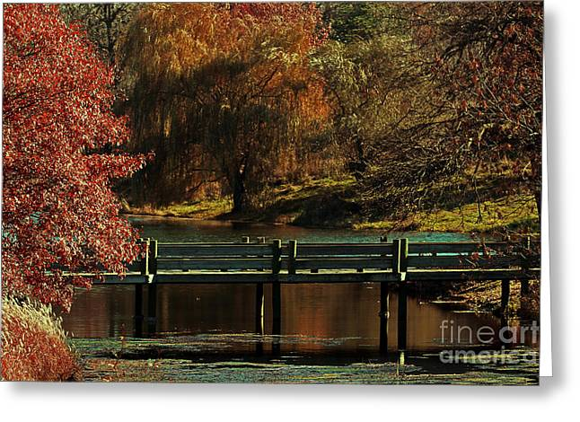 Mahoney State Park Greeting Card by Elizabeth Winter