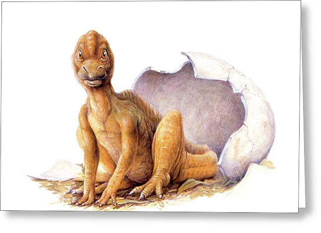 Maiasaura Dinosaur Egg Hatching Greeting Card