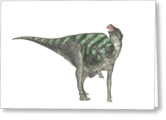 Maiasaura Dinosaur Greeting Card
