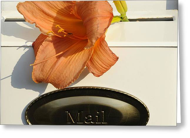 Mailbox Lily Greeting Card