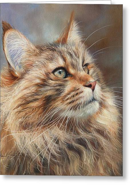 Maine Coon Cat Greeting Card by David Stribbling