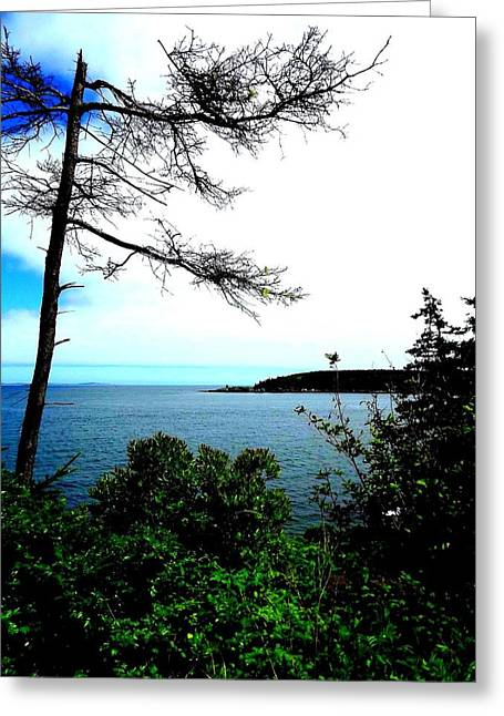 Maine Greeting Card by Dancingfire Brenda Morrell