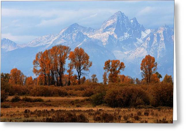 Majestic Backdrop Greeting Card