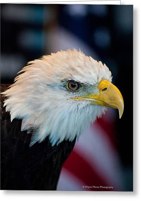 Majestic Bald Eagle Greeting Card by Wayne Moran