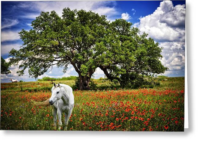 Majestic Beauty Greeting Card