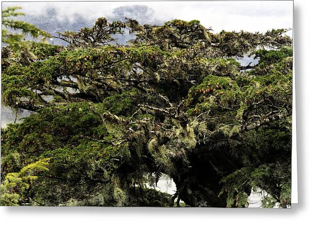 Greeting Card featuring the photograph Majestic Branches by Davina Washington