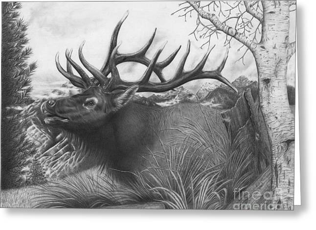 Majestic Bull Elk Greeting Card