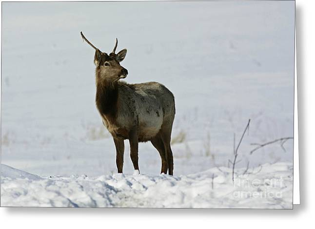 Majestic By Nature Greeting Card