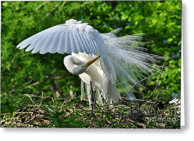 Greeting Card featuring the photograph Majestic Egret by Kathy Baccari