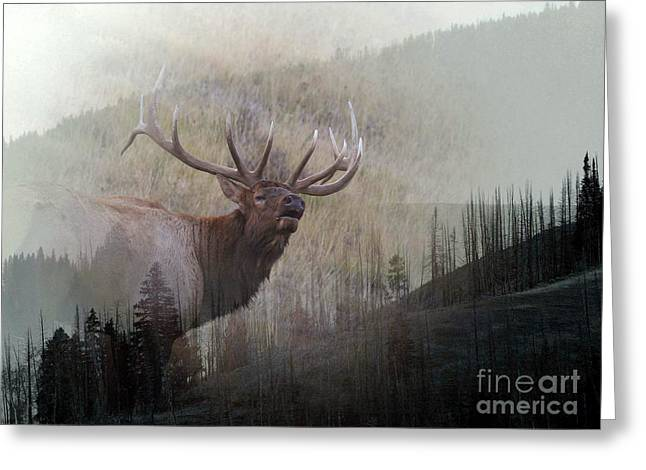 Majestic Elk Greeting Card by Clare VanderVeen