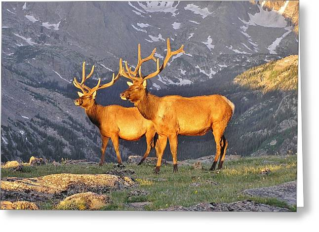 Greeting Card featuring the photograph Majestic Elk by Diane Alexander