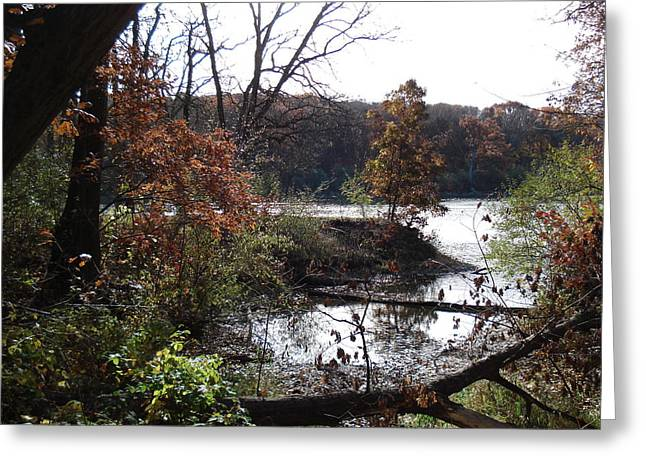 Greeting Card featuring the photograph Majestic Fall by J L Zarek