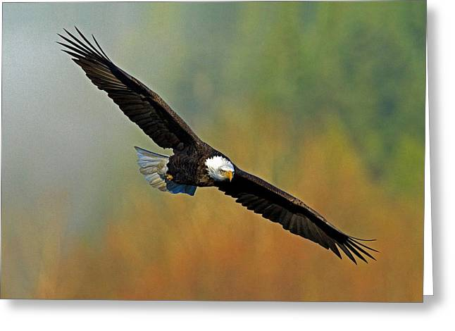 Majestic Flight Greeting Card