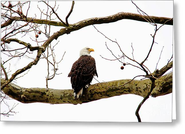 Greeting Card featuring the photograph Majestic I by Trina  Ansel