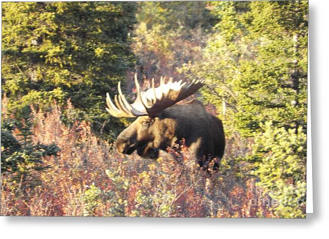 Majestic Moose Greeting Card