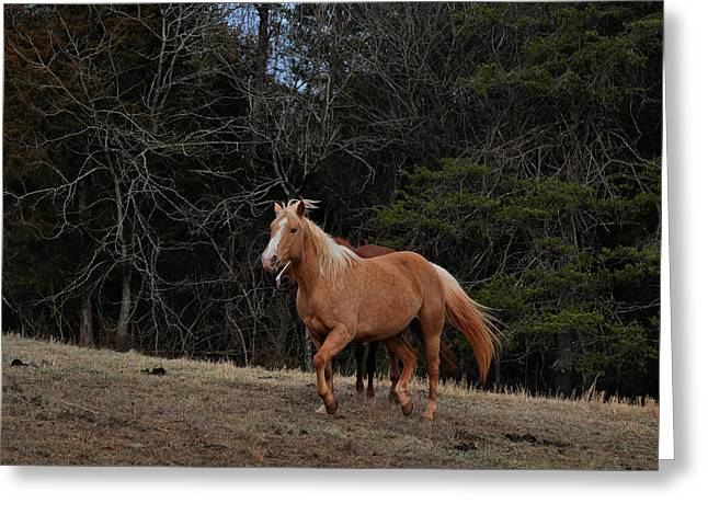 Majestic Palomino - Equine 0284e Greeting Card by Paul Lyndon Phillips