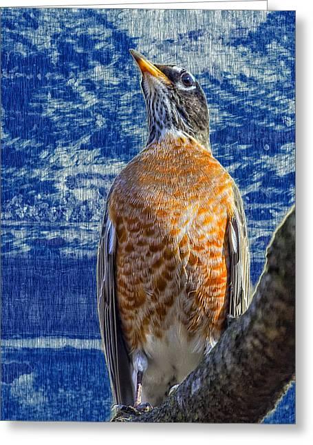 Majestic Robin Blues Greeting Card by Bill Tiepelman