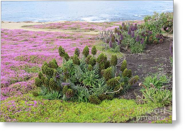 Majestic Shoreline Greeting Card by Joseph Baril
