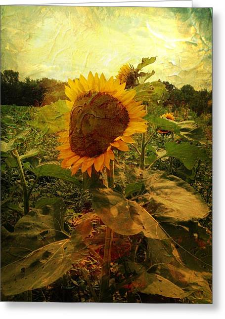 Majestic Sunflower  Greeting Card