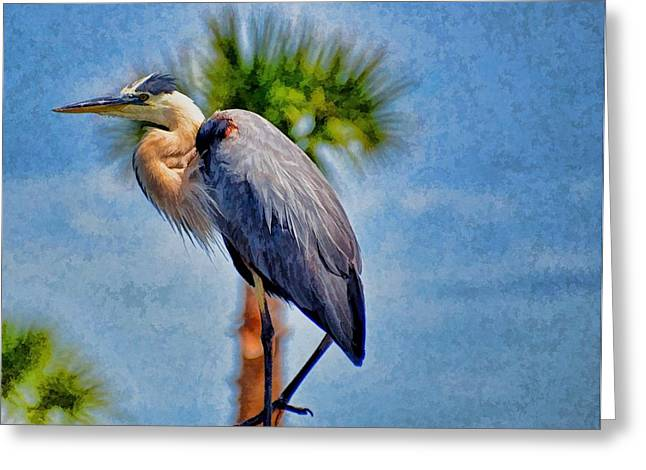 Majestic Tri-colored Heron Greeting Card by Pamela Blizzard
