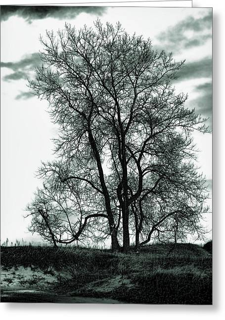 Greeting Card featuring the photograph Majesty by Lauren Radke