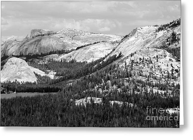 Majesty Mountains Black And White Greeting Card by Mary Lou Chmura