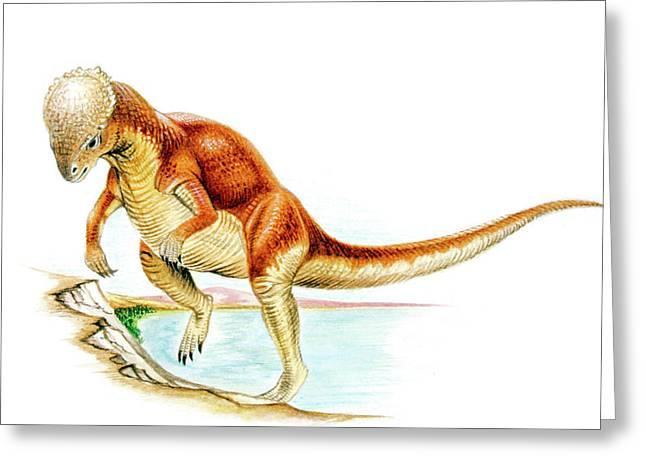 Majungasaurus Dinosaur Greeting Card by Deagostini/uig