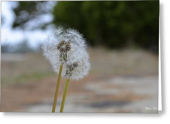 Make A Wish Greeting Card by Alex King