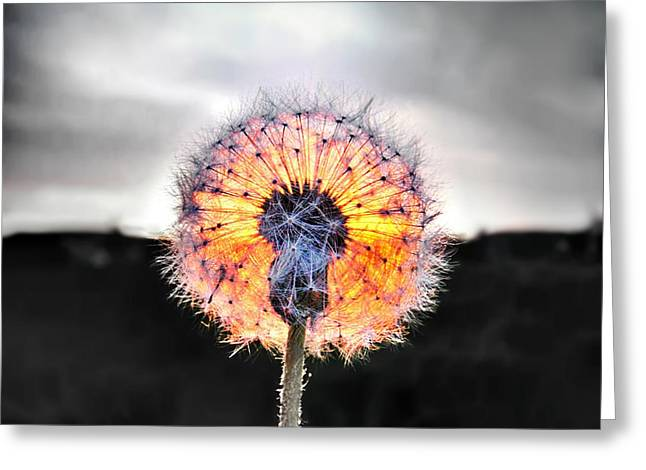 Make A Wish  Greeting Card by Marianna Mills
