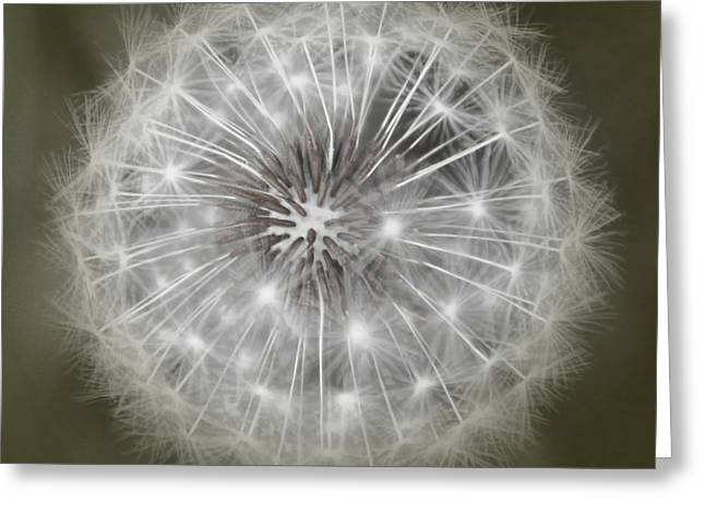 Make A Wish Greeting Card by Peggy Hughes