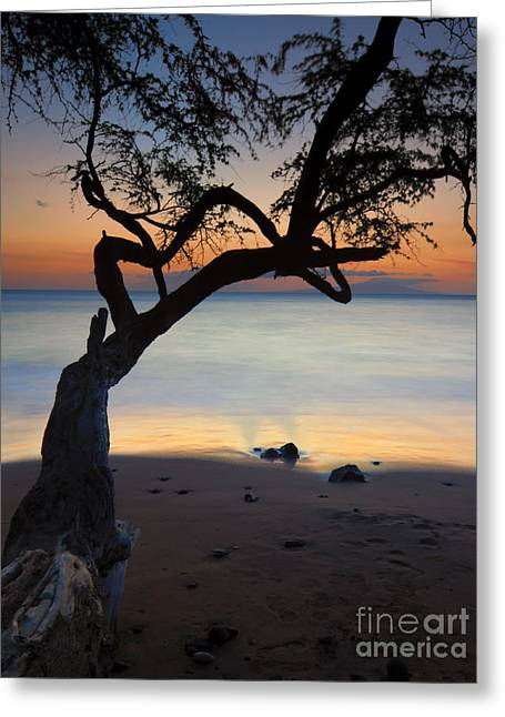 Makena Breeze Greeting Card by Mike  Dawson