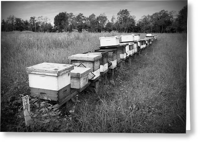 Making Honey II Bw Greeting Card