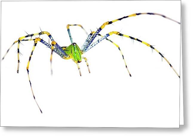Malagasy Green Lynx Spider Greeting Card