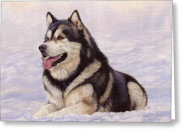 Malamute Greeting Card by David Stribbling