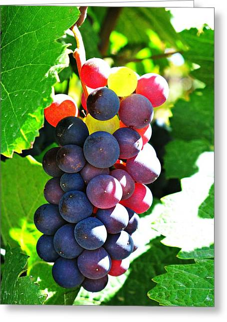 Malbec Greeting Card by Emily Fidler