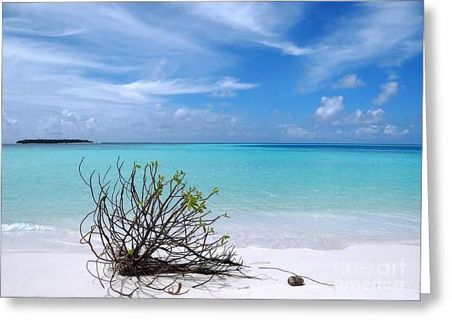 Maldives 12 Greeting Card by Giorgio Darrigo