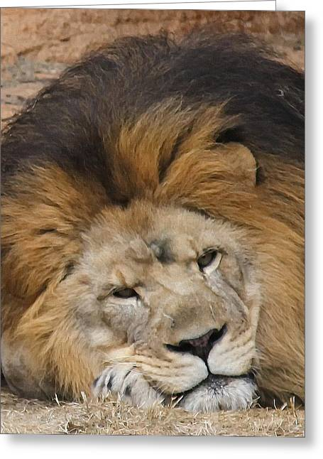 Male African Lion Greeting Card