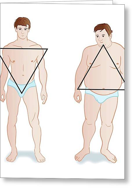 Male Body Shapes Greeting Card