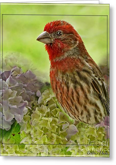 Greeting Card featuring the photograph Male Finch In Hydrangesa by Debbie Portwood