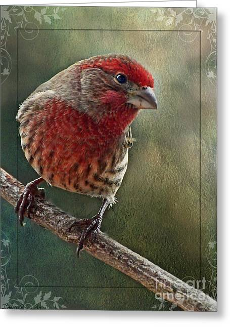Male Housefinch With Green Texture And Decorations Greeting Card by Debbie Portwood