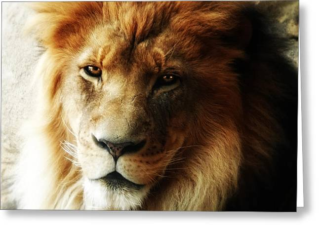 Male Lion Face Close Up Greeting Card